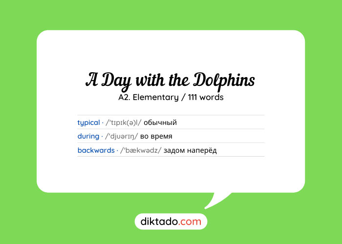 A Day with the Dolphins